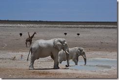 Elefant-4_thumb_thumb